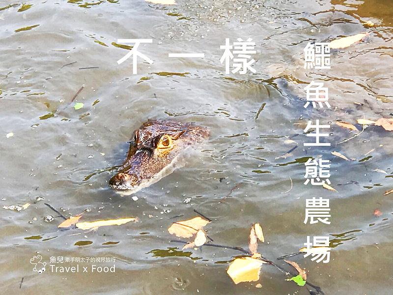 「不一樣鱷魚生態農場」真的很不一樣,刺激的餵食秀等你親自來體驗! @魚兒 x 牽手明太子的「視」界旅行