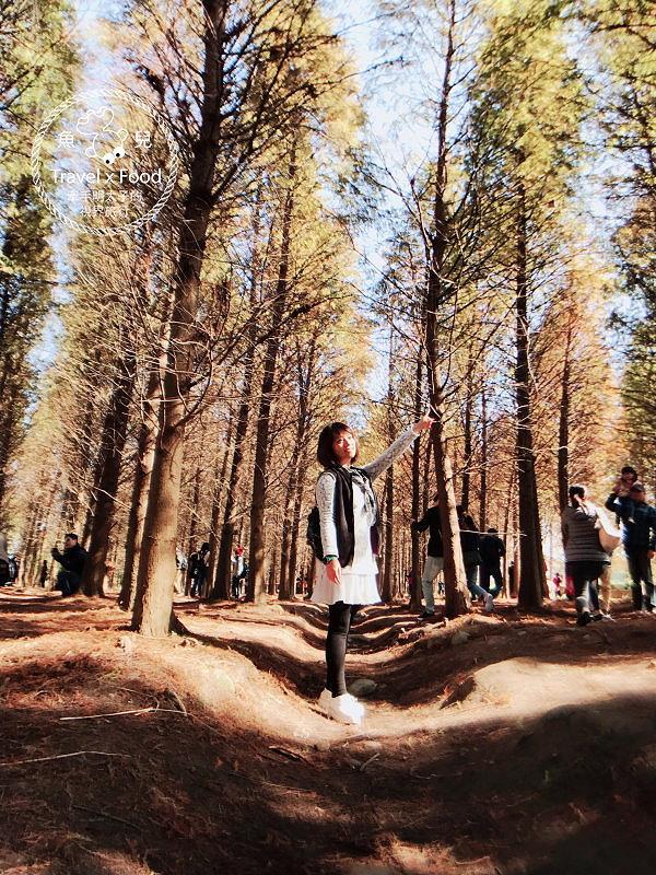 【遊】桃園八德落羽松秘境(季節限定) @魚兒 x 牽手明太子的「視」界旅行