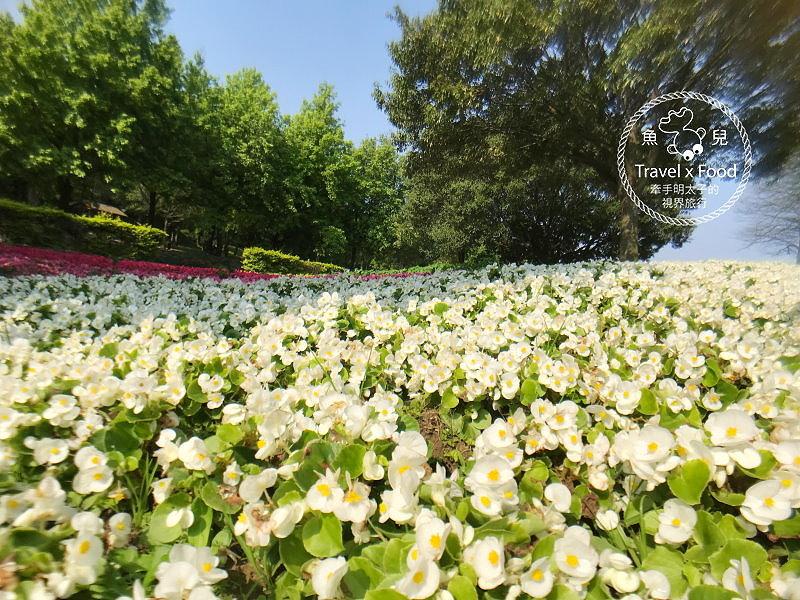 埔頂公園|春天的花毯,歐式花園的浪漫,休閒的好去處 @魚兒 x 牽手明太子的「視」界旅行