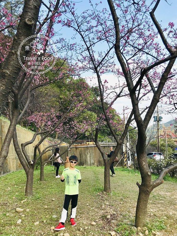 祈福兼賞櫻,壽山巖觀音寺櫻花開(2/14花況) @魚兒 x 牽手明太子的「視」界旅行
