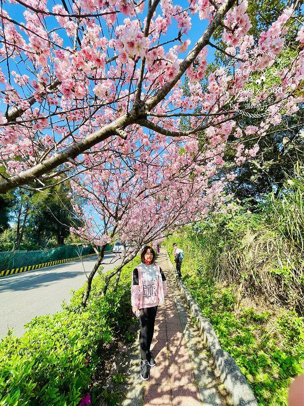 迎接春天,大古山風景區賞櫻去! @魚兒 x 牽手明太子的「視」界旅行