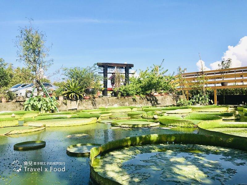 2020 桃園蓮花季,「金湖岸+康莊蓮園」之雙農場一日遊 @魚兒 x 牽手明太子的「視」界旅行