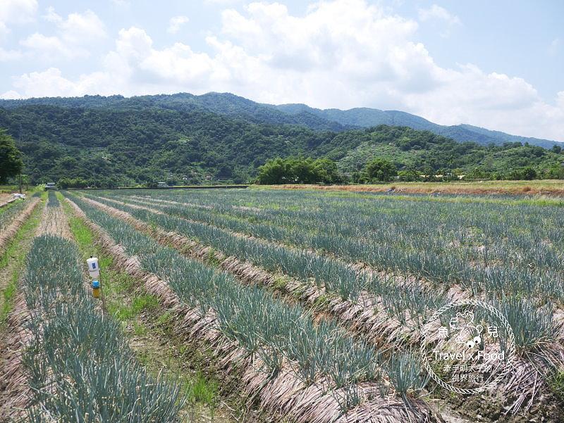 農夫青蔥體驗農場|拔蔥、洗蔥、蔥油餅DIY體驗,鮮脆青蔥美味無限! @魚兒 x 牽手明太子的「視」界旅行
