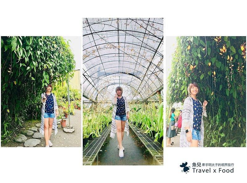 金雙甡花卉農場|季節限定~浪漫黃金雨,文心蘭花瀑隧道 @魚兒 x 牽手明太子的「視」界旅行
