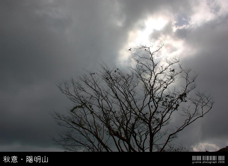 【攝】秋意.陽明山 @魚兒 x 牽手明太子的「視」界旅行