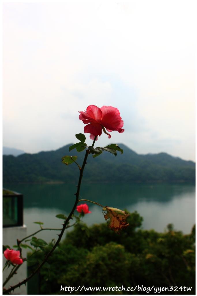 大溪湖畔午茶 @魚兒 x 牽手明太子的「視」界旅行