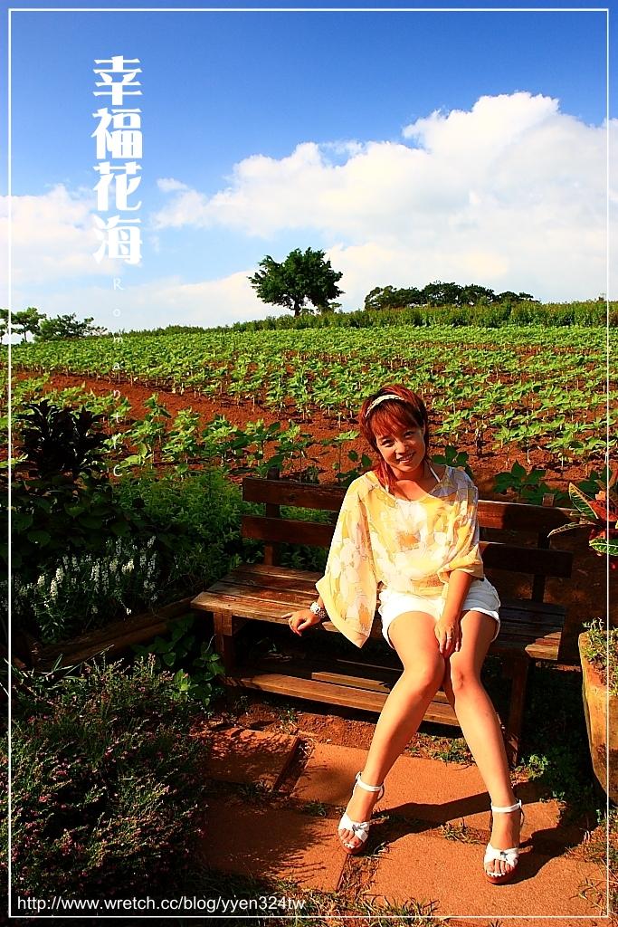 【攝】幸福花海 @魚兒 x 牽手明太子的「視」界旅行